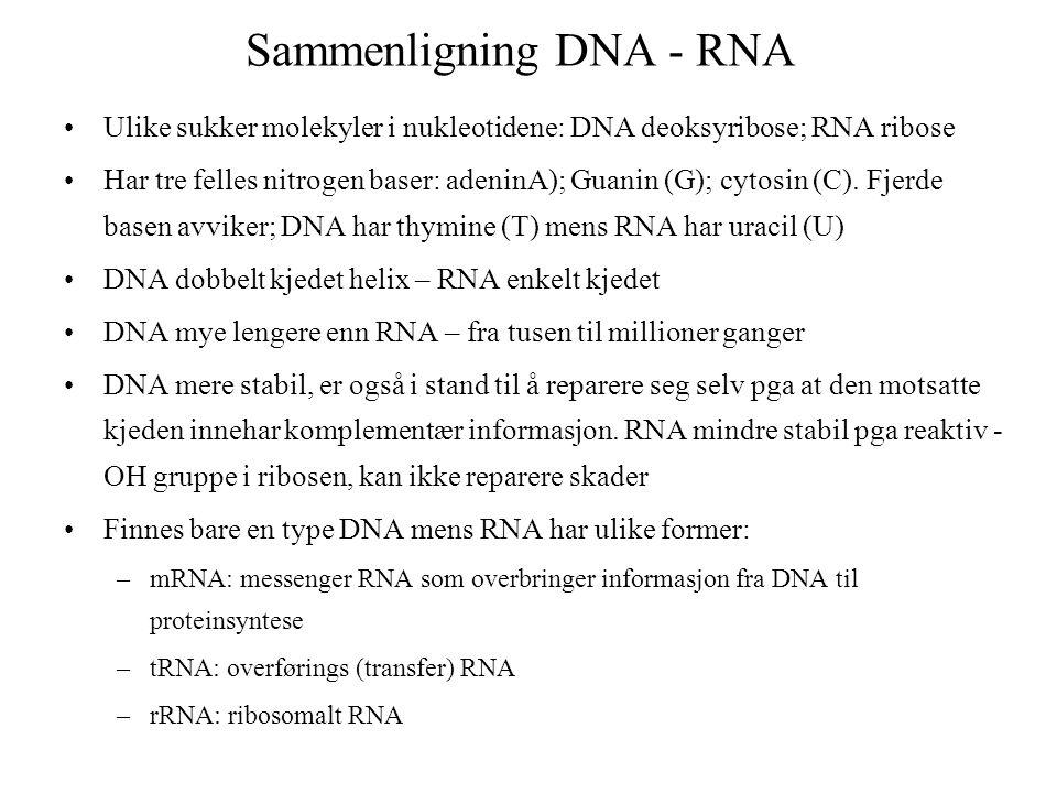 Sammenligning DNA - RNA