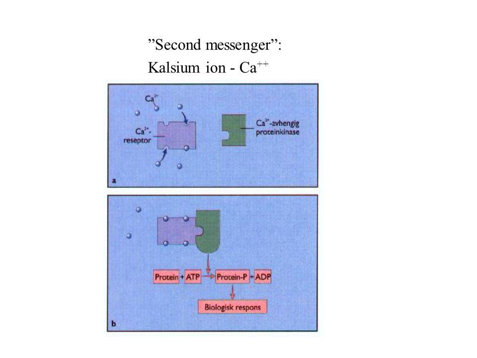 Second messenger : Kalsium ion - Ca++