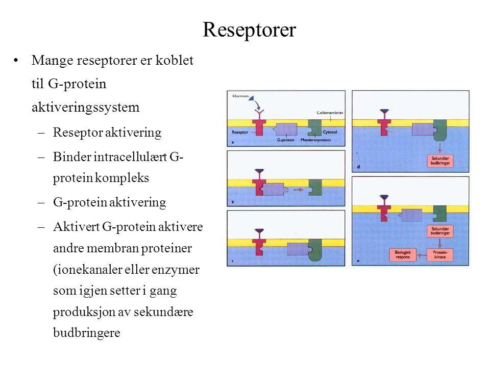 Reseptorer Mange reseptorer er koblet til G-protein aktiveringssystem