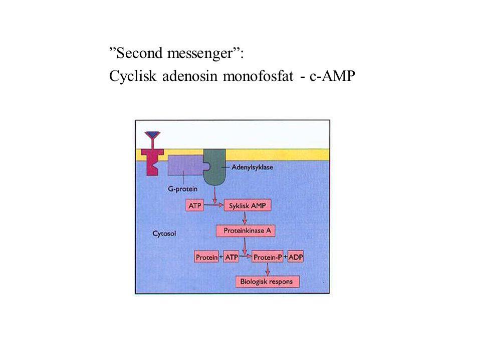 Second messenger : Cyclisk adenosin monofosfat - c-AMP