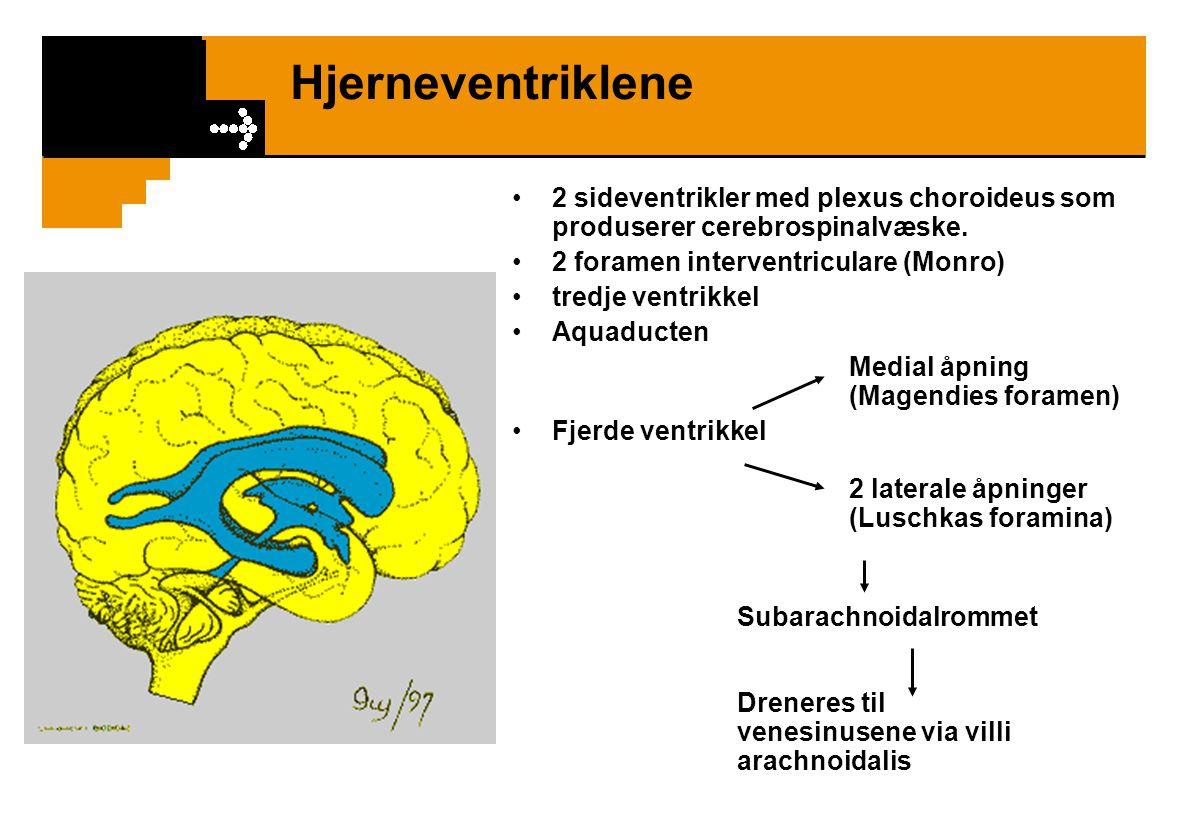 Hjerneventriklene 2 sideventrikler med plexus choroideus som produserer cerebrospinalvæske. 2 foramen interventriculare (Monro)
