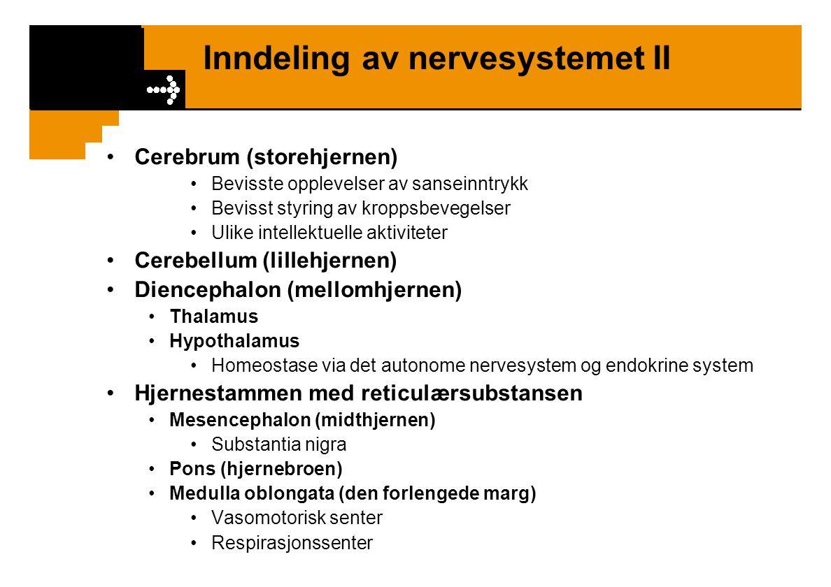 Inndeling av nervesystemet II