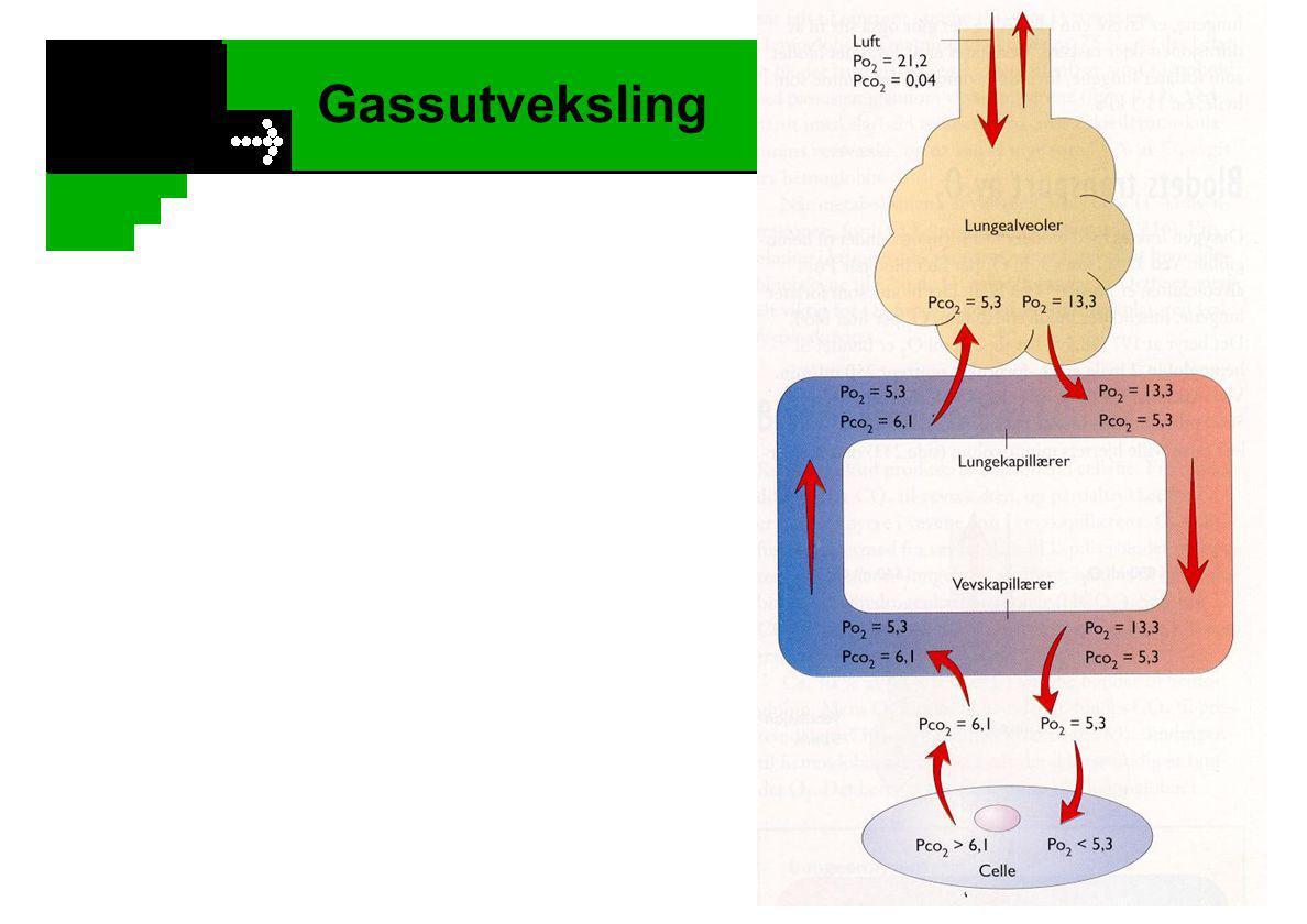 Gassutveksling