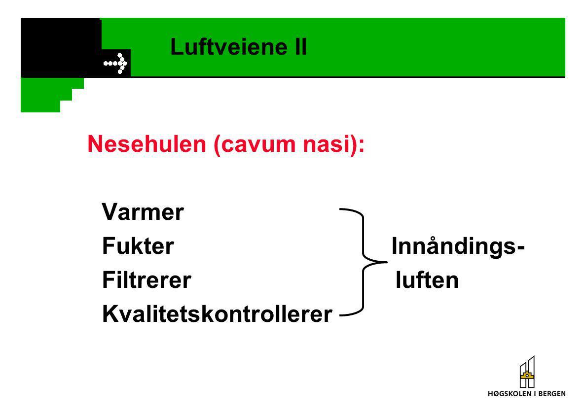 Luftveiene II Nesehulen (cavum nasi): Varmer. Fukter Innåndings- Filtrerer luften.