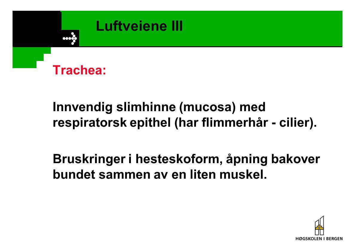 Luftveiene III Trachea: