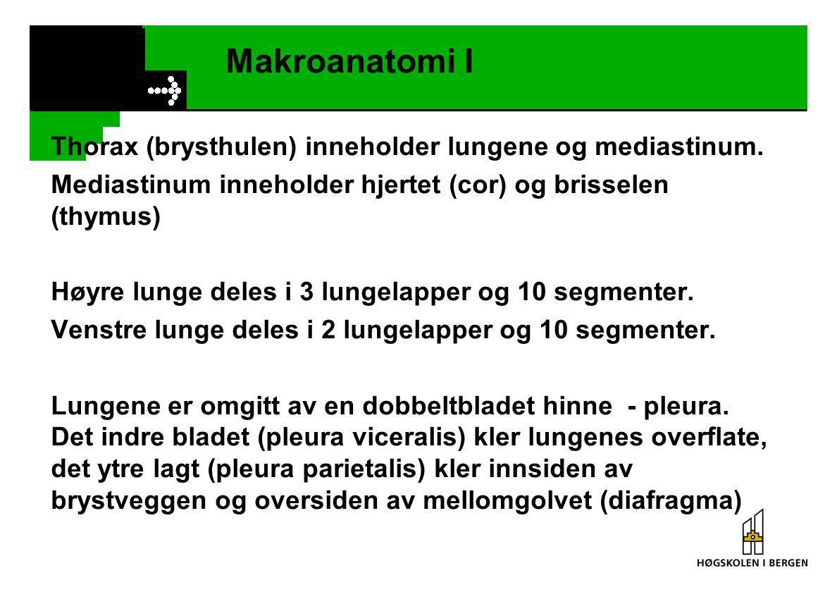 Makroanatomi I Thorax (brysthulen) inneholder lungene og mediastinum.