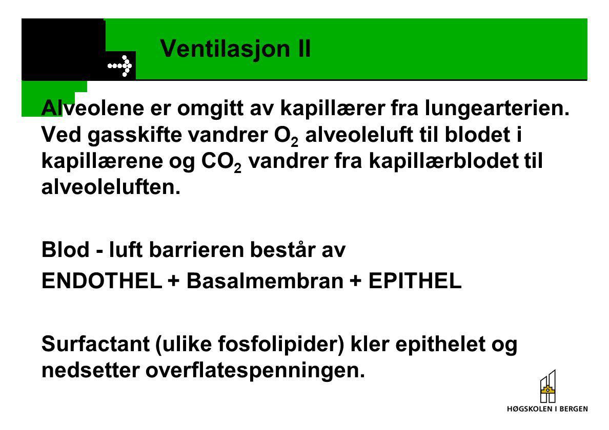 Ventilasjon II