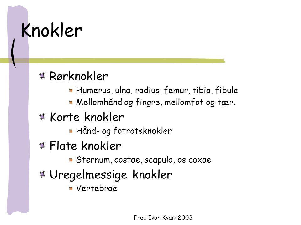 Knokler Rørknokler Korte knokler Flate knokler Uregelmessige knokler