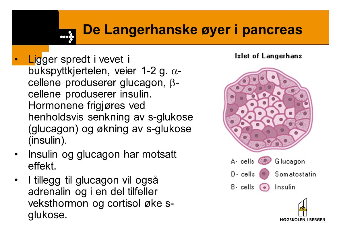 De Langerhanske øyer i pancreas