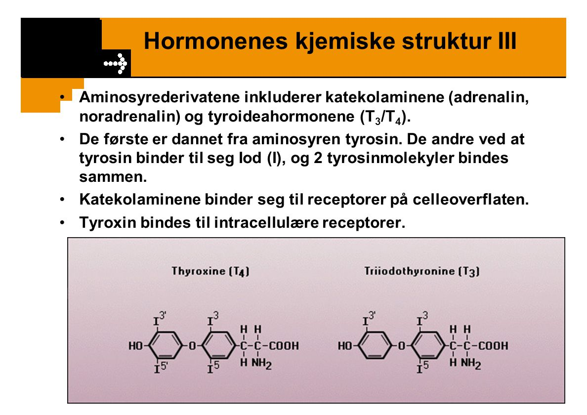 Hormonenes kjemiske struktur III