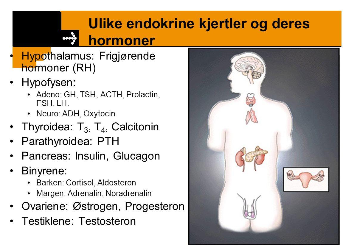 Ulike endokrine kjertler og deres hormoner
