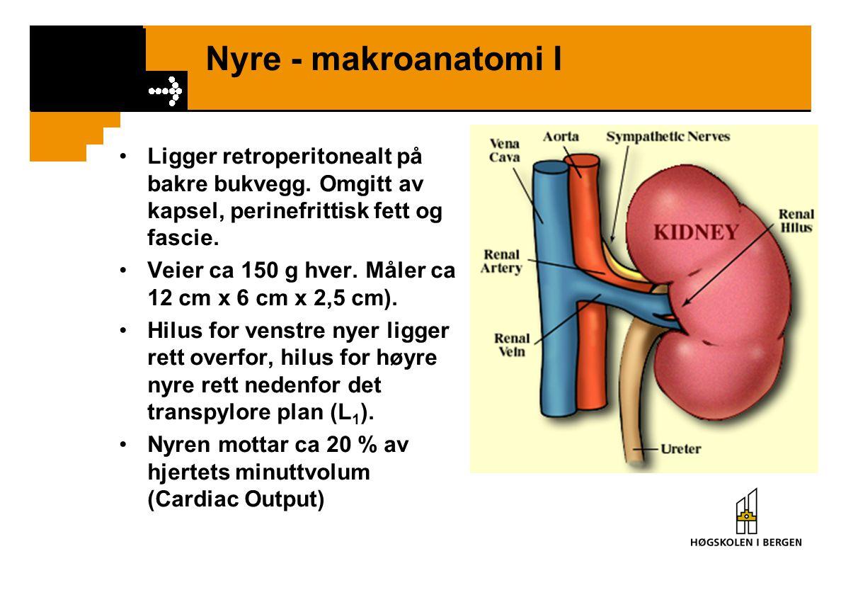 Nyre - makroanatomi I Ligger retroperitonealt på bakre bukvegg. Omgitt av kapsel, perinefrittisk fett og fascie.