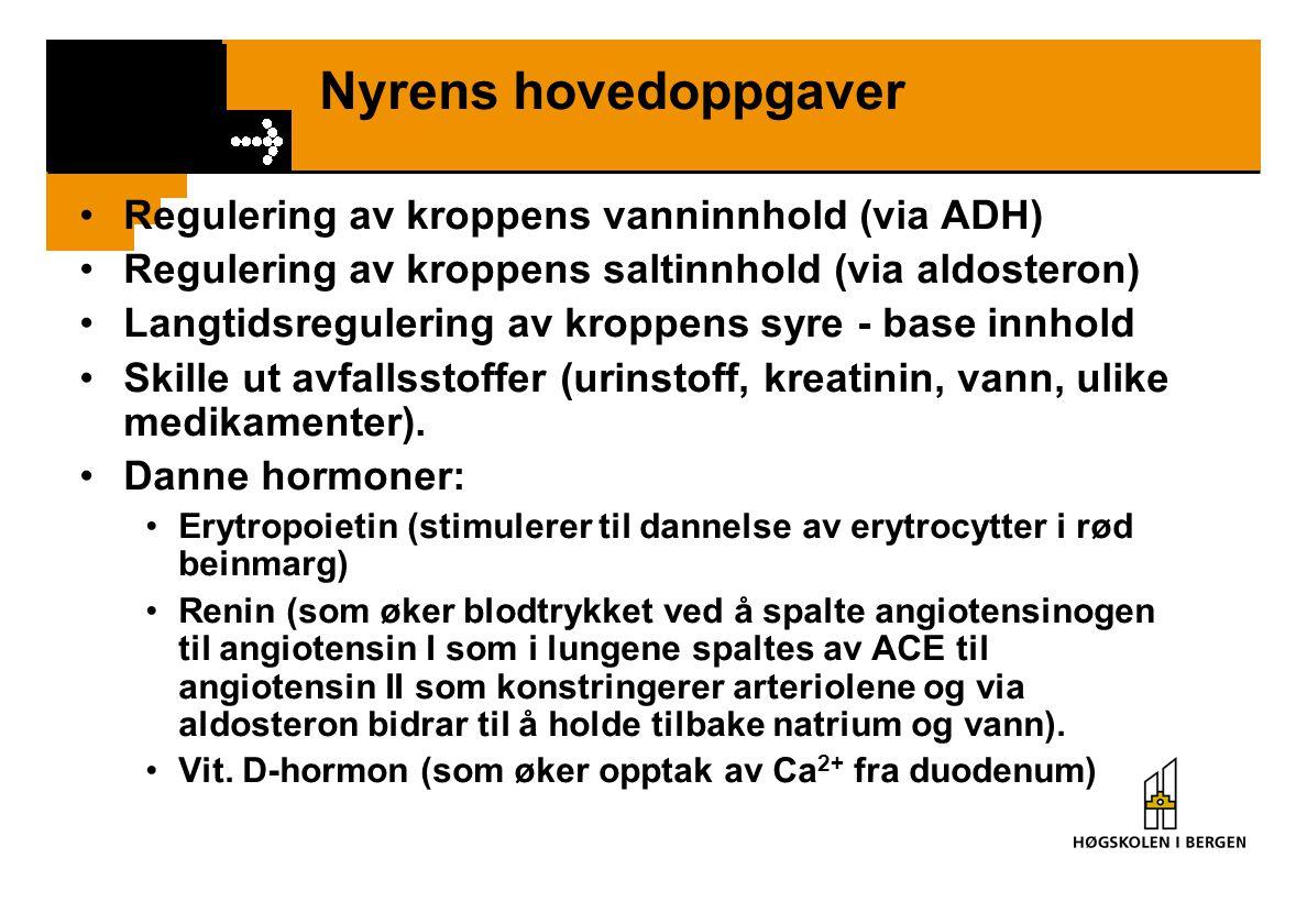 Nyrens hovedoppgaver Regulering av kroppens vanninnhold (via ADH)