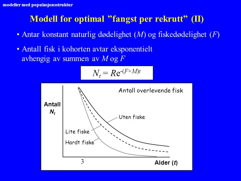 Modell for optimal fangst per rekrutt (II)