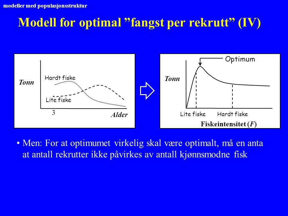 Modell for optimal fangst per rekrutt (IV)