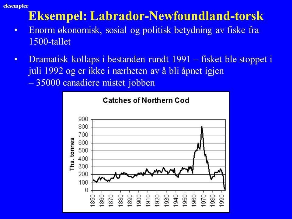 Eksempel: Labrador-Newfoundland-torsk