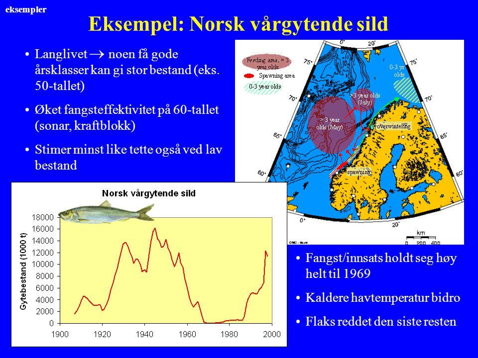 Eksempel: Norsk vårgytende sild