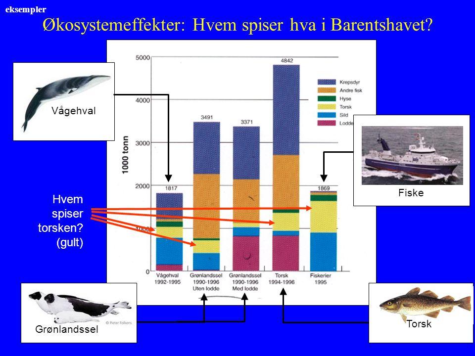 Økosystemeffekter: Hvem spiser hva i Barentshavet