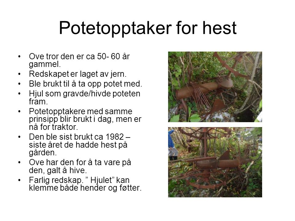 Potetopptaker for hest