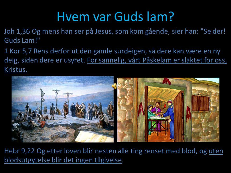 Hvem var Guds lam Joh 1,36 Og mens han ser på Jesus, som kom gående, sier han: Se der! Guds Lam!