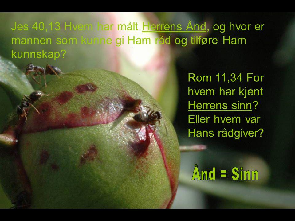 Jes 40,13 Hvem har målt Herrens Ånd, og hvor er mannen som kunne gi Ham råd og tilføre Ham kunnskap