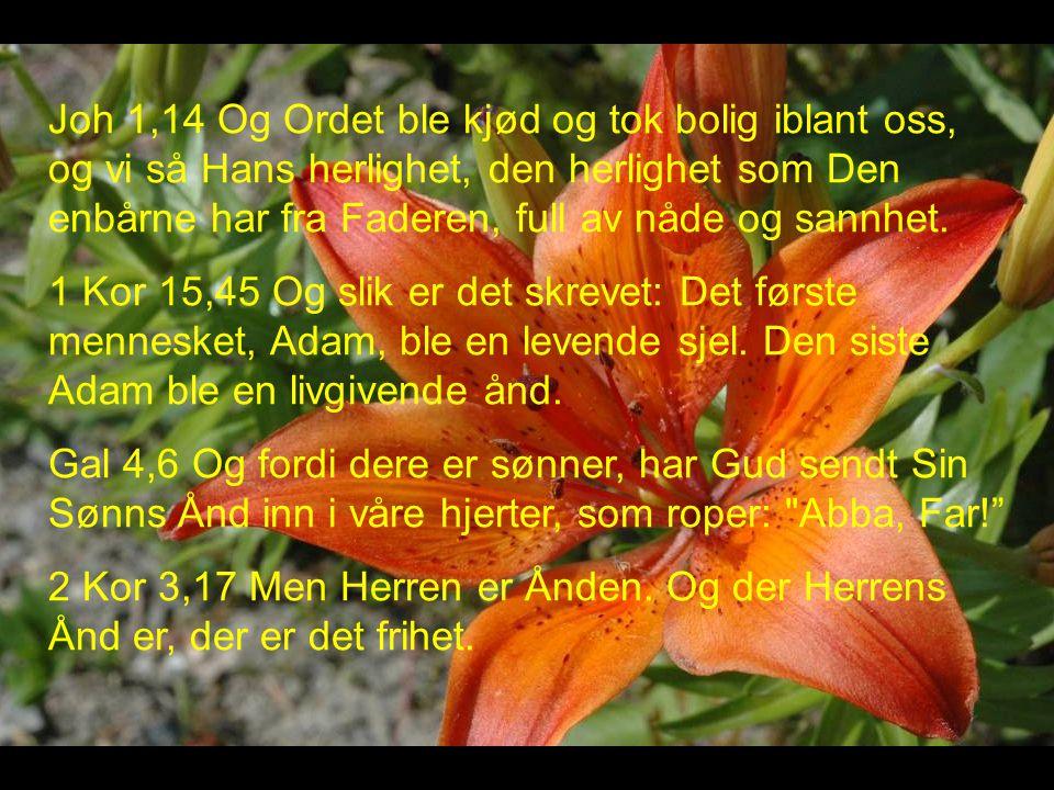 Joh 1,14 Og Ordet ble kjød og tok bolig iblant oss, og vi så Hans herlighet, den herlighet som Den enbårne har fra Faderen, full av nåde og sannhet.