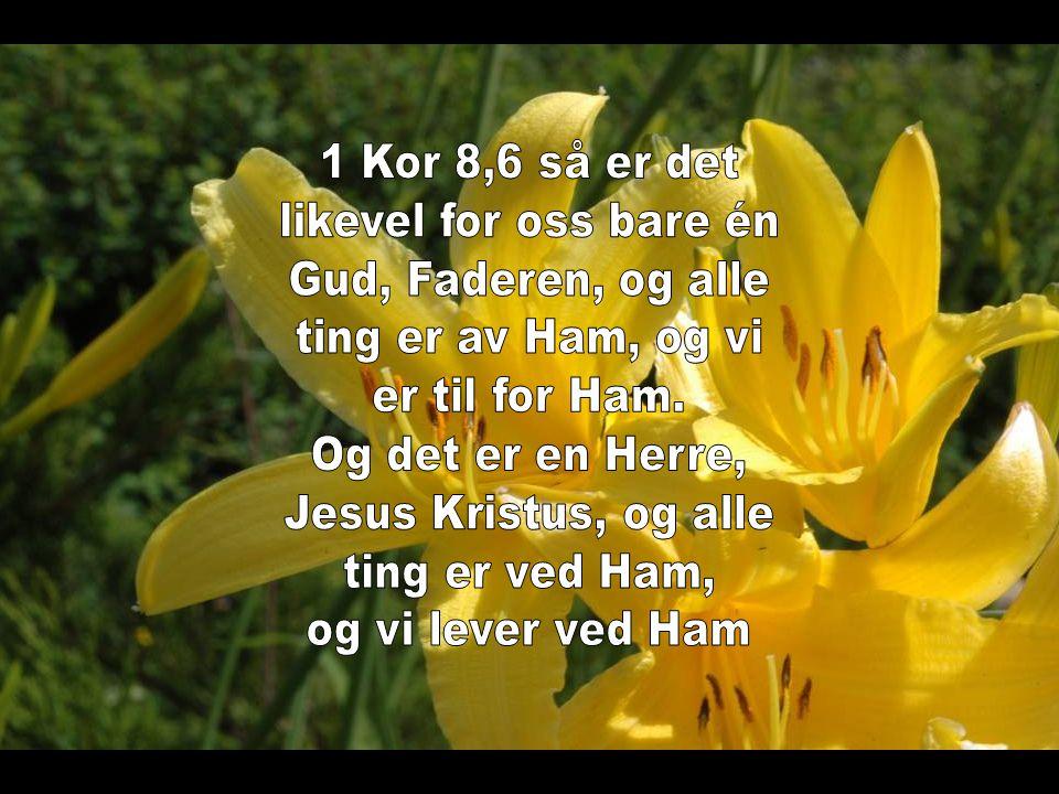 1 Kor 8,6 så er det likevel for oss bare én. Gud, Faderen, og alle. ting er av Ham, og vi. er til for Ham.