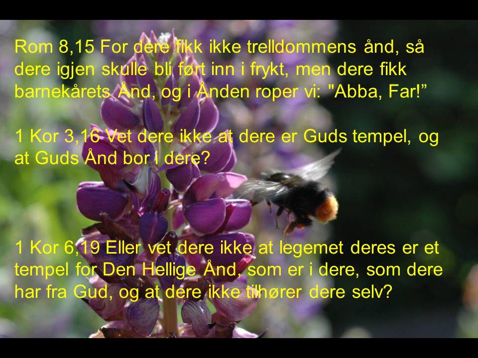 Rom 8,15 For dere fikk ikke trelldommens ånd, så dere igjen skulle bli ført inn i frykt, men dere fikk barnekårets Ånd, og i Ånden roper vi: Abba, Far!