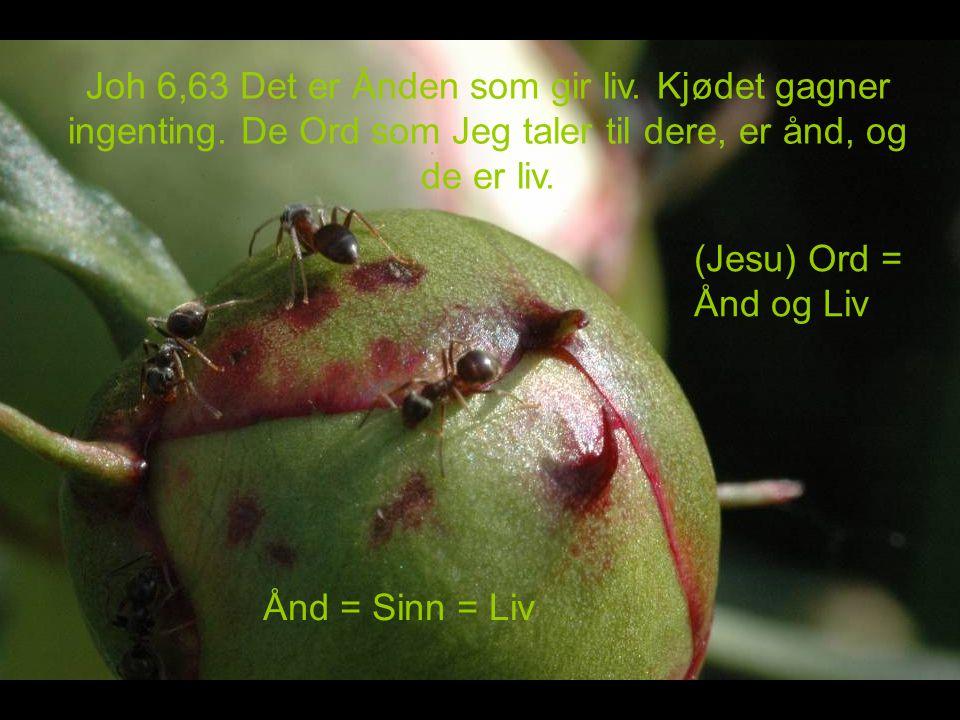 Joh 6,63 Det er Ånden som gir liv. Kjødet gagner ingenting