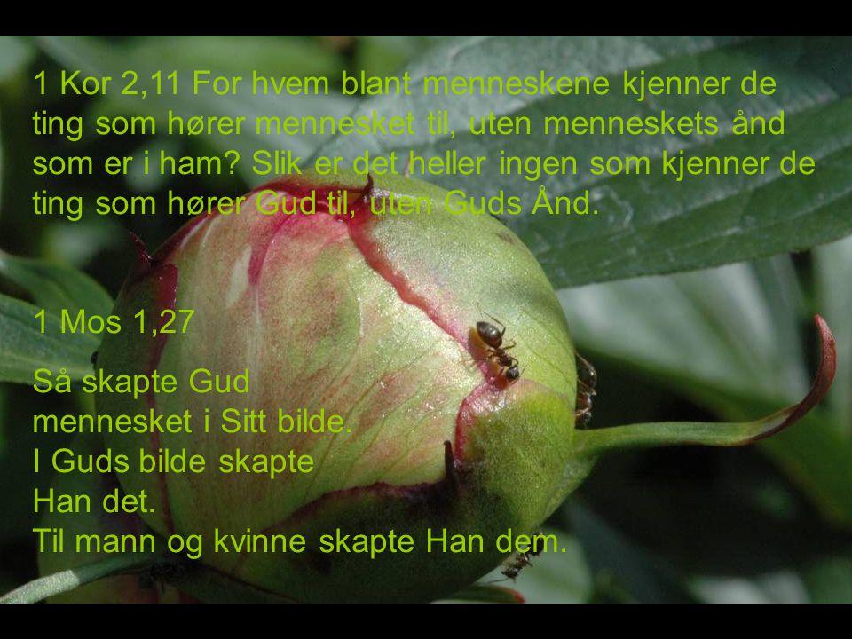 1 Kor 2,11 For hvem blant menneskene kjenner de ting som hører mennesket til, uten menneskets ånd som er i ham Slik er det heller ingen som kjenner de ting som hører Gud til, uten Guds Ånd.