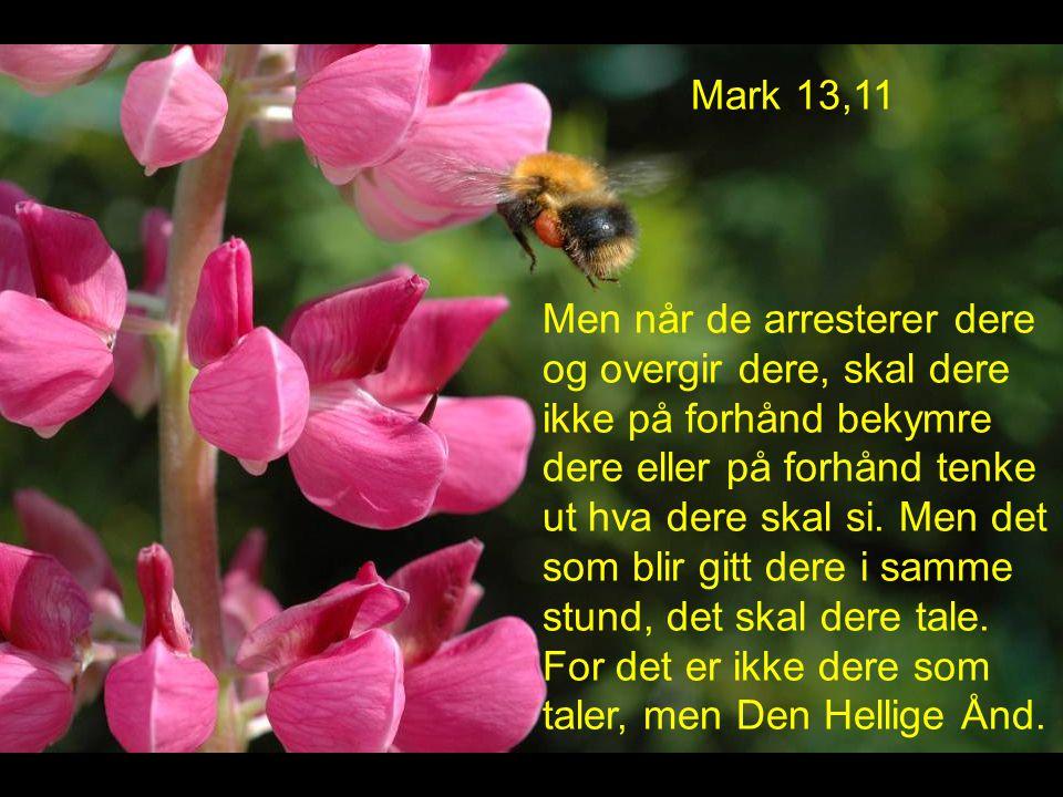 Mark 13,11