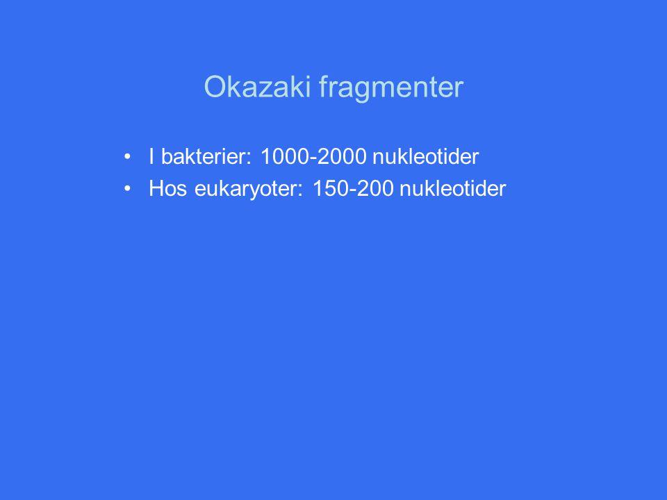 Okazaki fragmenter I bakterier: 1000-2000 nukleotider