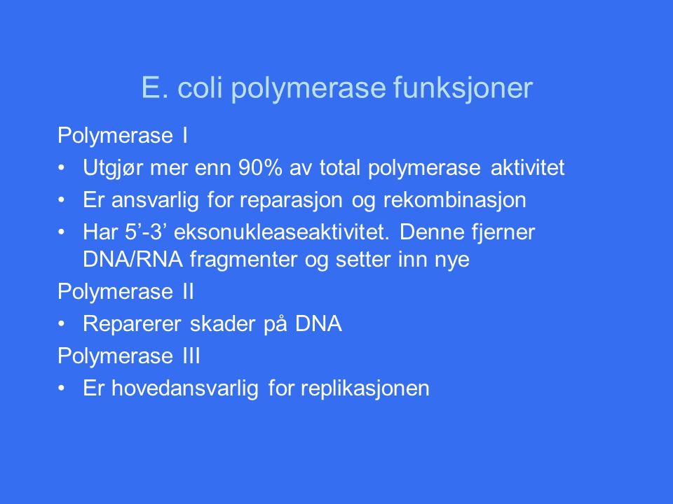 E. coli polymerase funksjoner