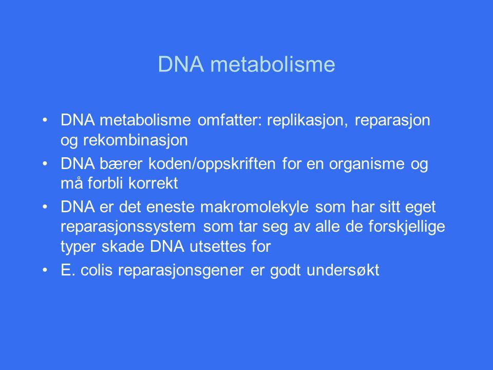 DNA metabolisme DNA metabolisme omfatter: replikasjon, reparasjon og rekombinasjon.