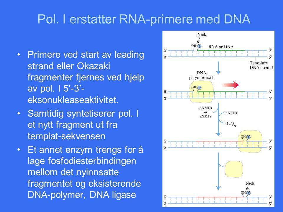 Pol. I erstatter RNA-primere med DNA