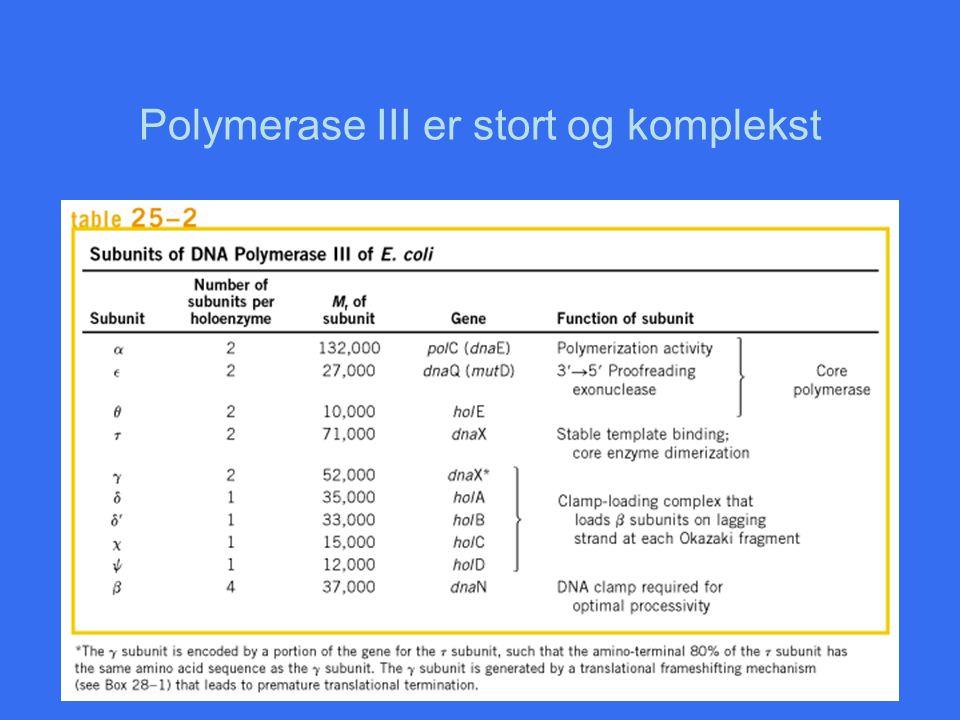 Polymerase III er stort og komplekst