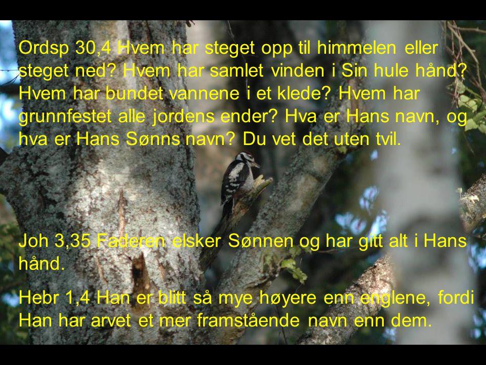 Ordsp 30,4 Hvem har steget opp til himmelen eller steget ned