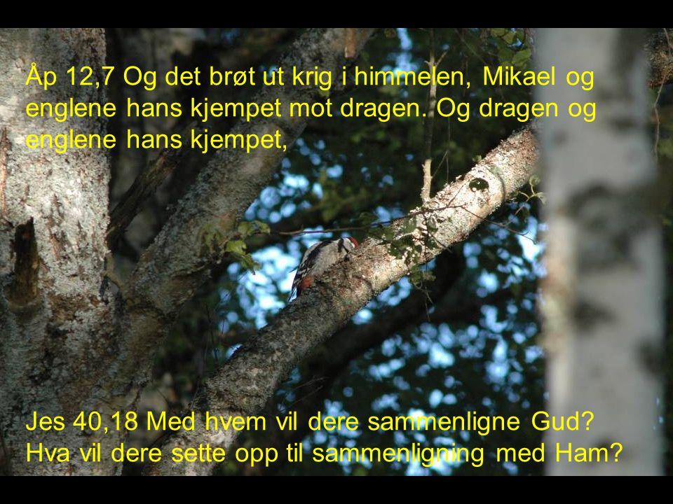 Åp 12,7 Og det brøt ut krig i himmelen, Mikael og englene hans kjempet mot dragen. Og dragen og englene hans kjempet,