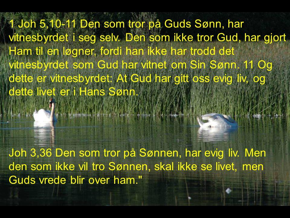 1 Joh 5,10-11 Den som tror på Guds Sønn, har vitnesbyrdet i seg selv