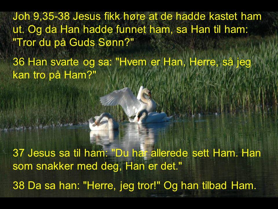 Joh 9,35-38 Jesus fikk høre at de hadde kastet ham ut