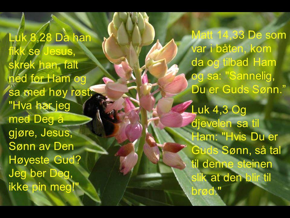 Matt 14,33 De som var i båten, kom da og tilbad Ham og sa: Sannelig, Du er Guds Sønn.