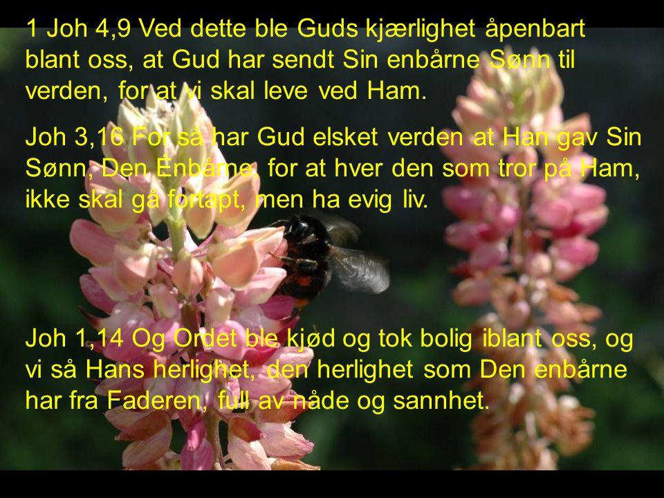 1 Joh 4,9 Ved dette ble Guds kjærlighet åpenbart blant oss, at Gud har sendt Sin enbårne Sønn til verden, for at vi skal leve ved Ham.