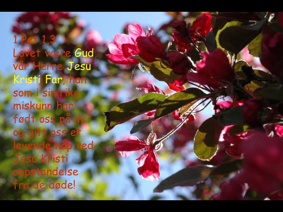 1 Pet 1,3 Lovet være Gud, vår Herre Jesu Kristi Far, han som i sin rike miskunn har født oss på ny og gitt oss et levende håp ved Jesu Kristi oppstandelse fra de døde!