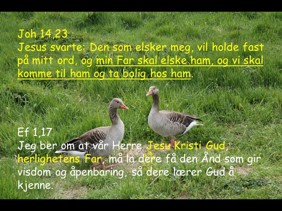 Joh 14,23 Jesus svarte: Den som elsker meg, vil holde fast på mitt ord, og min Far skal elske ham, og vi skal komme til ham og ta bolig hos ham.