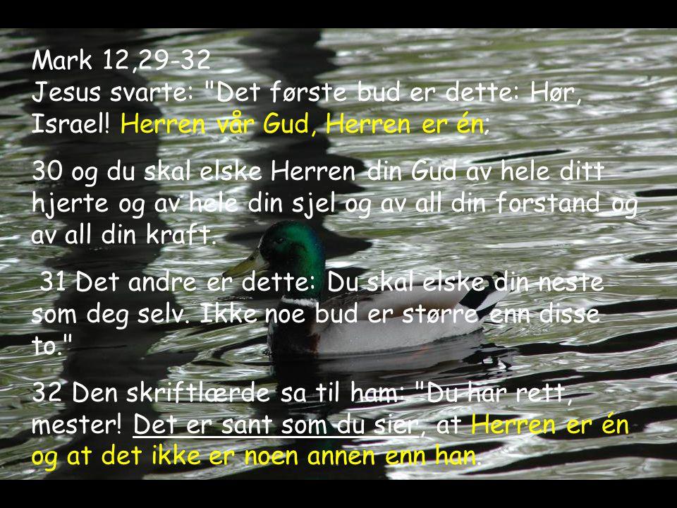 Mark 12,29-32 Jesus svarte: Det første bud er dette: Hør, Israel