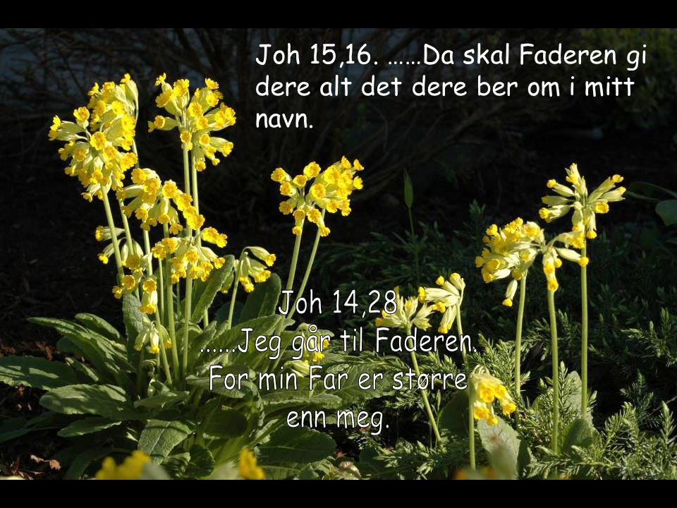 Joh 15,16. ……Da skal Faderen gi dere alt det dere ber om i mitt navn.