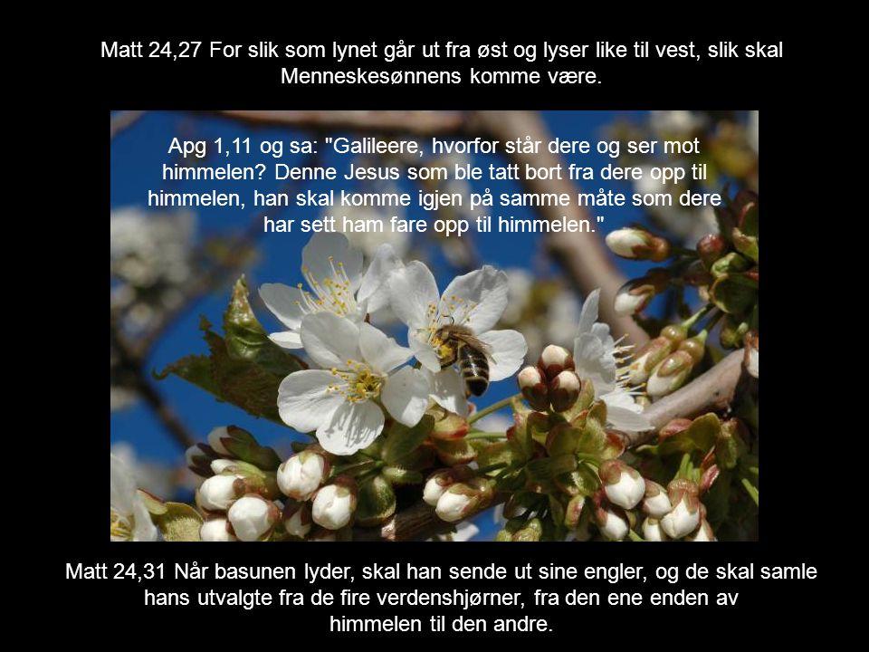 Matt 24,27 For slik som lynet går ut fra øst og lyser like til vest, slik skal Menneskesønnens komme være.