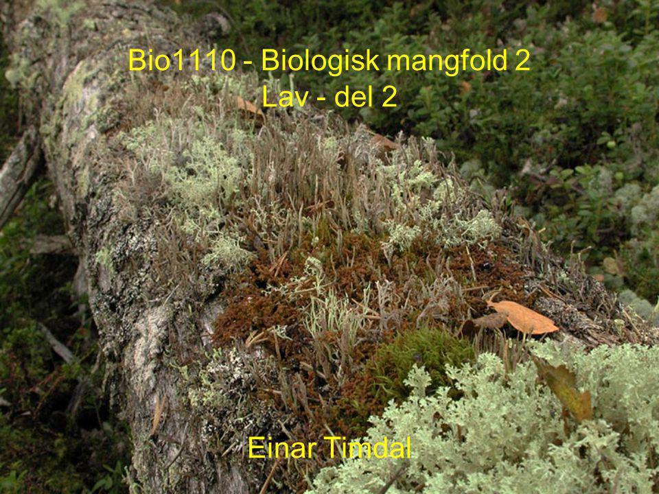 Bio1110 - Biologisk mangfold 2 Lav - del 2 Einar Timdal