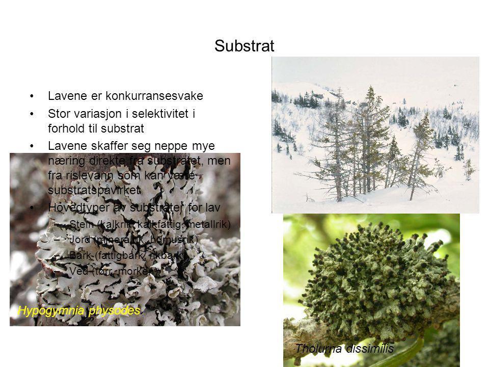 Substrat Lavene er konkurransesvake