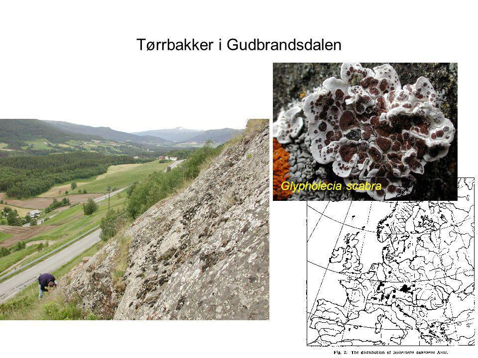 Tørrbakker i Gudbrandsdalen